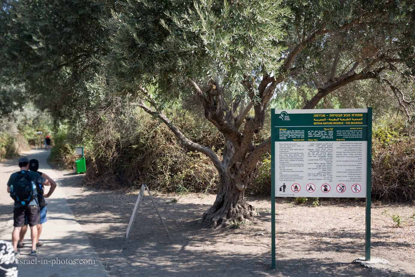 At Betiha Nature Reserve - The Majrasa, Israel