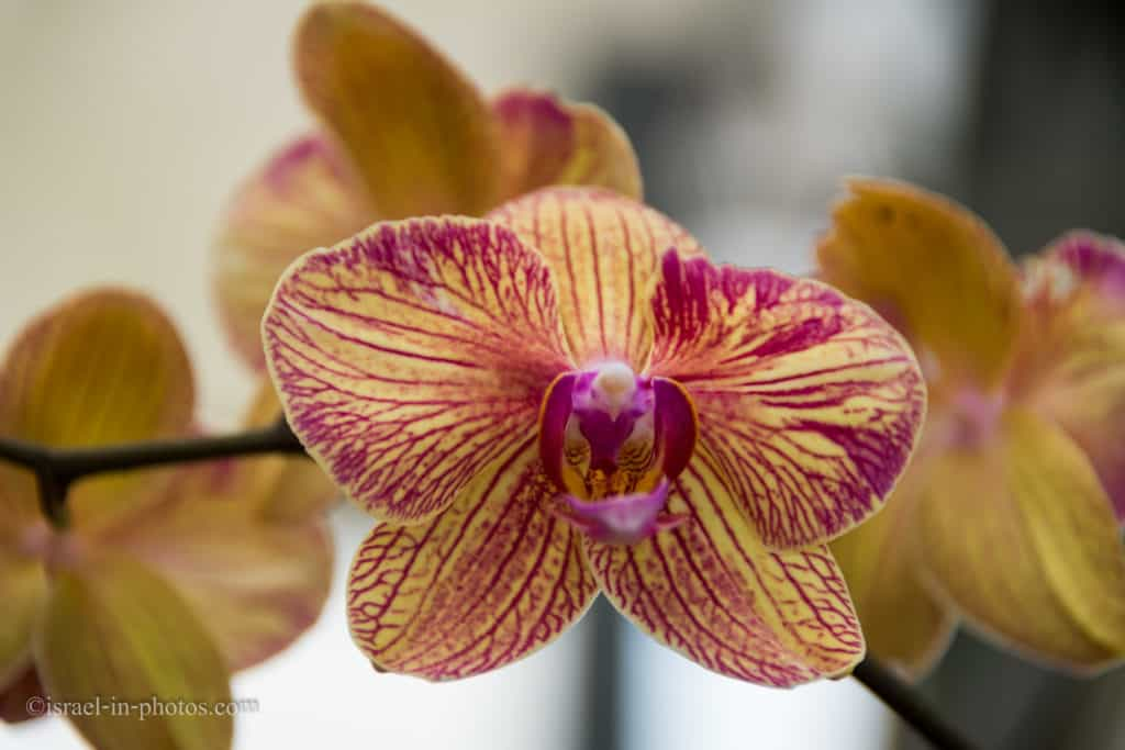 Visiting Utopia Orchid Park