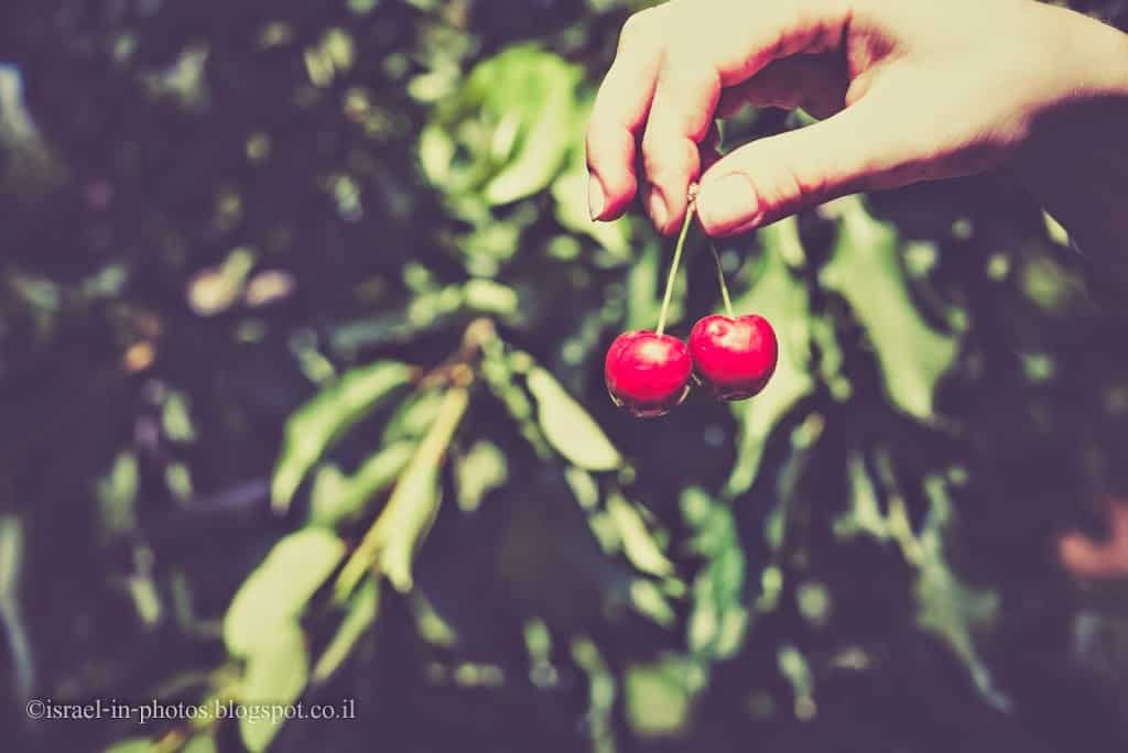 Cherry Picking In Odem