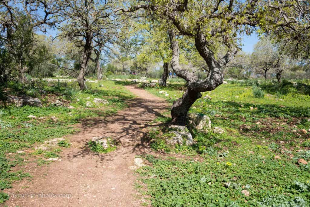 Alonei Abba nature reserve at Spring, Israel