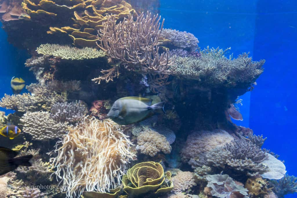 Red Sea Reef at Coral World Underwater Observatory in Eilat, Israel