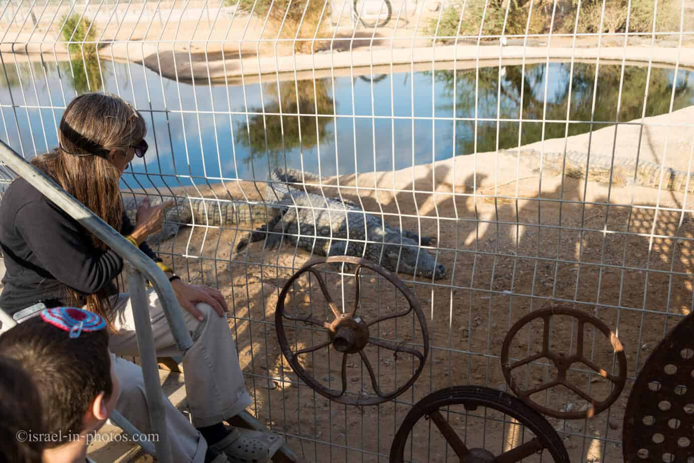 At Crocoloco Crocodile Farm, Israel