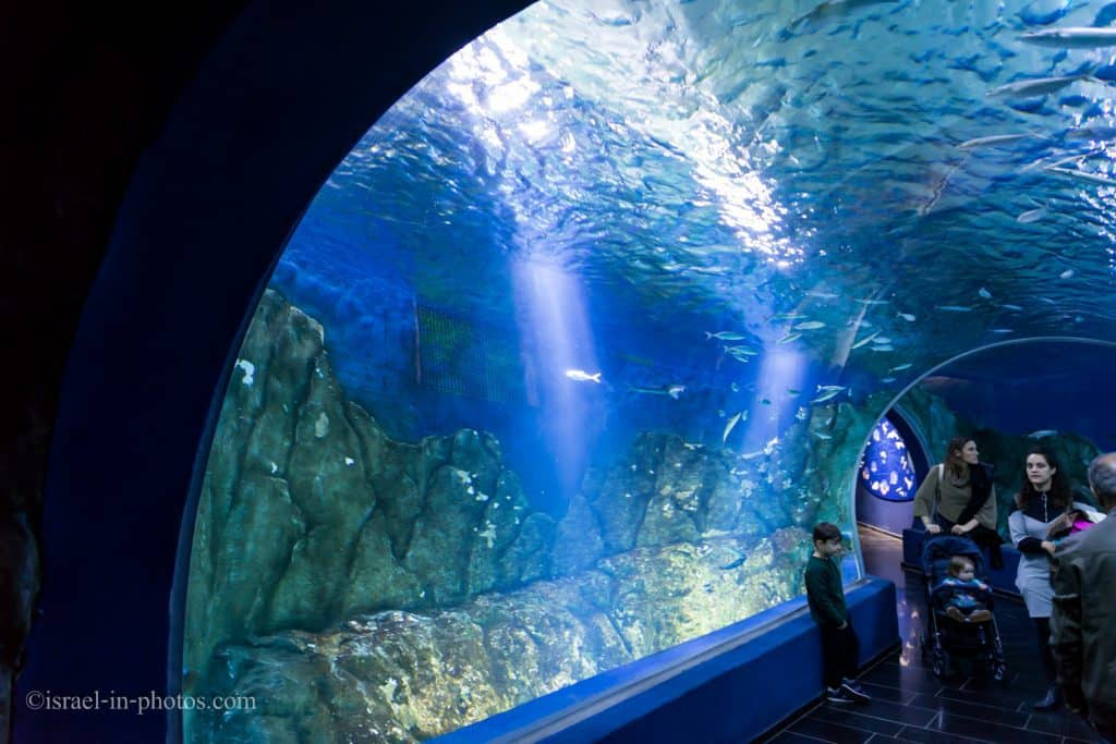 The underwater viewing tunnel at the Mediterranean Sea Gallery