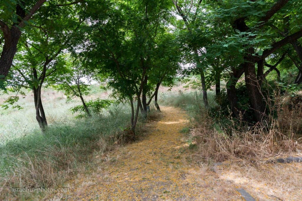 The Squill trail at Tel Afek