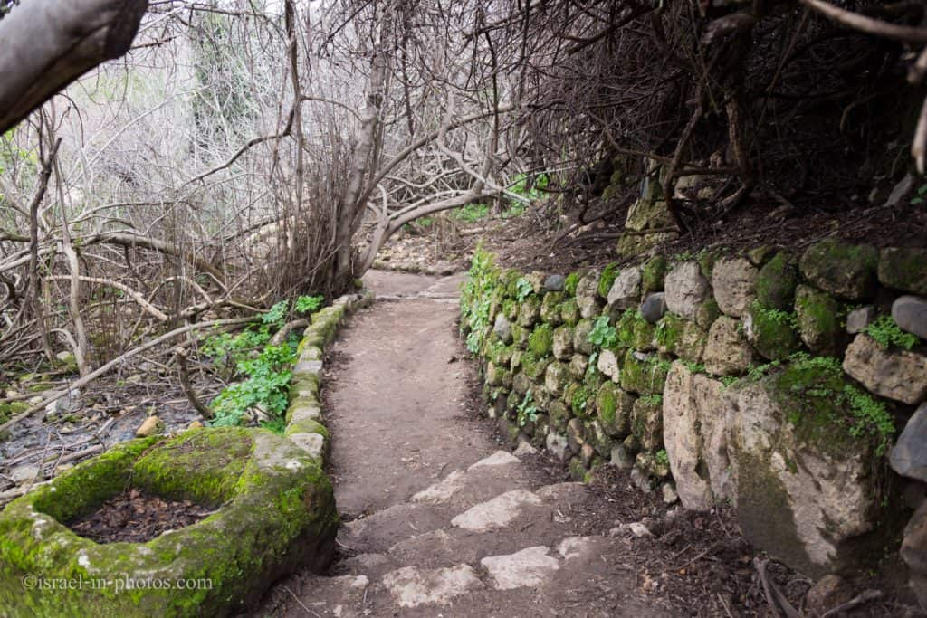 The trail at Banias Nature Reserve