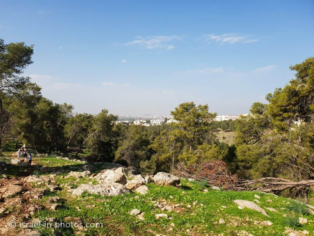 Kule Forest and Elad