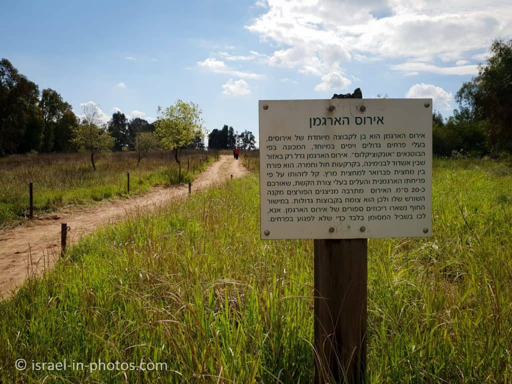 Explanation sign about Irises