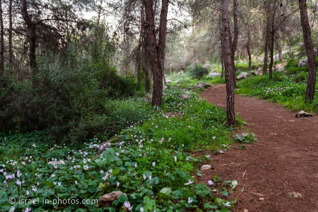 Wildflowers Trail at Rosh HaAyin Forest