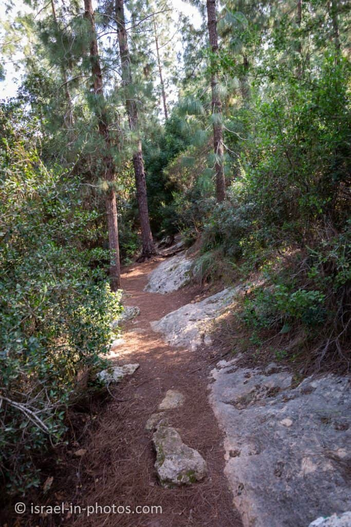 Green trail at Nesher Park