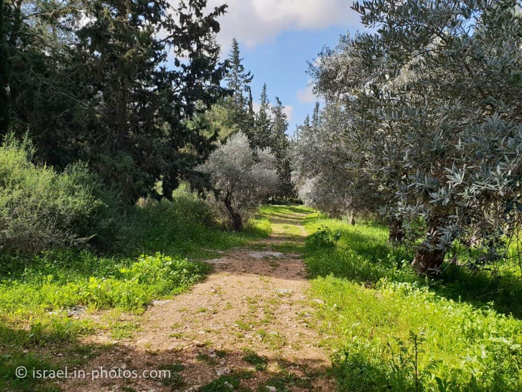 Even HaEzer Trail at Rosh HaAyin Forest