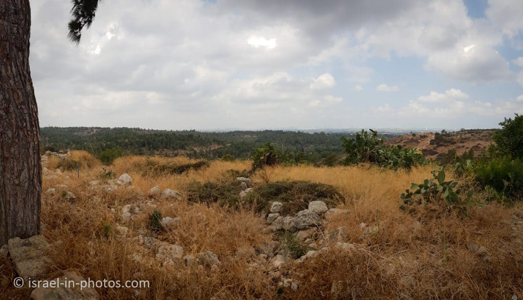 View from Horshim Forest